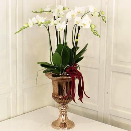 Bakır Cam Vazoda Orkide Tasarım