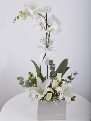 Kutuda Tek Dal Orkide ve Arajman
